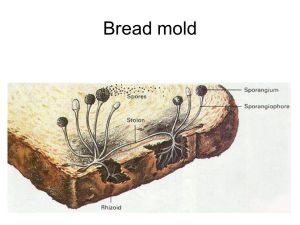Ever Eaten Bread After Cutting Off The Moldy Parts? Here's Why You Shouldn't