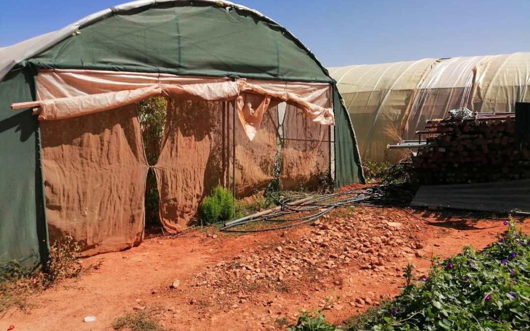 لاجئات سوريات في لبنان… ضحايا تحرش و أسيرات لقمة العيش