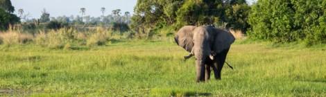 Okavango Delta Diaries with Parents