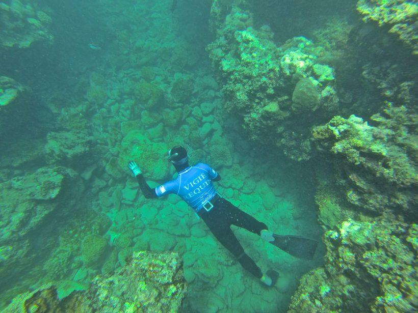 Mai 2013 – Crise requin à La Réunion, notre position.