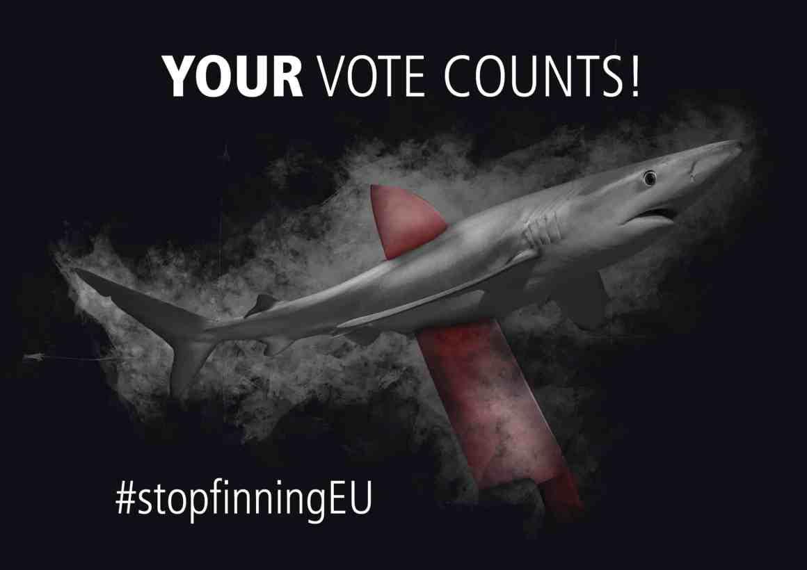 Initiative citoyenne pour les requins en Europe