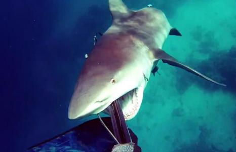 Diver fends off aggressive bull shark on Great Barrier Reef
