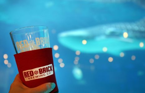 Drink Red Brick beer, save whale sharks
