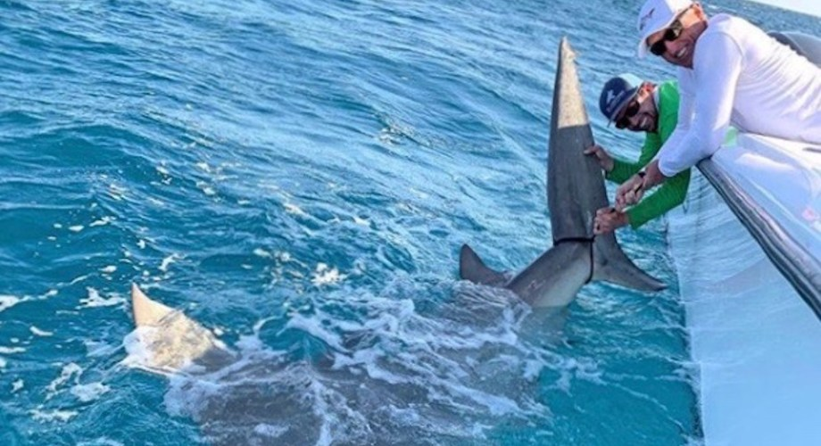 Golfer Greg 'The Shark' Norman encounters massive hammerhead shark