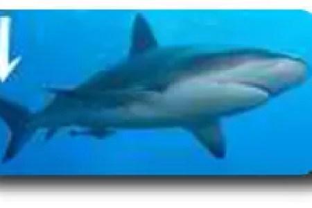 interior cavity of shark interior » Free Interior Design | Mir Detok