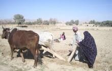 Militancy Devastates Balochistan Agriculture