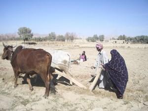 baloch-agri
