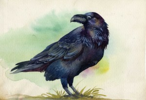 Black raven watercolor painting