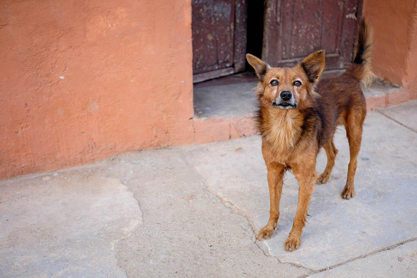 Dogs-of-Cuba-Sharon-Blance-Melbourne-photographer-PWS011-1473