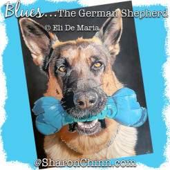 DME19011webSC-Blues-The-German-Shepherd