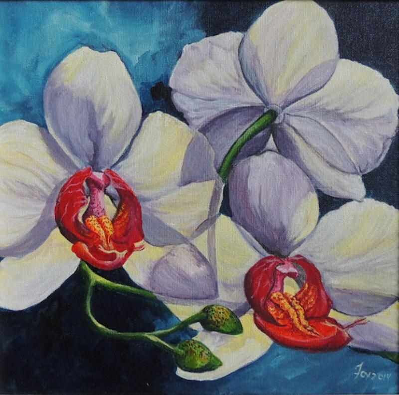 White Phalaenopsis Orchid in Bloom