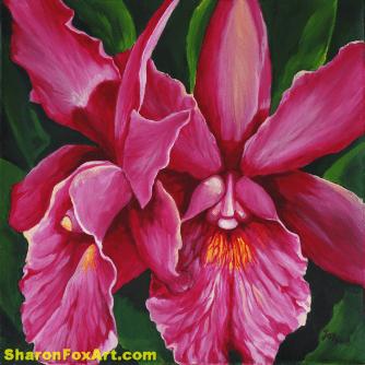 Cattleya Mossiae Orchid