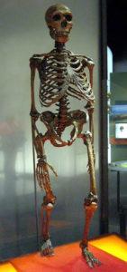282px-Neanderthalensis