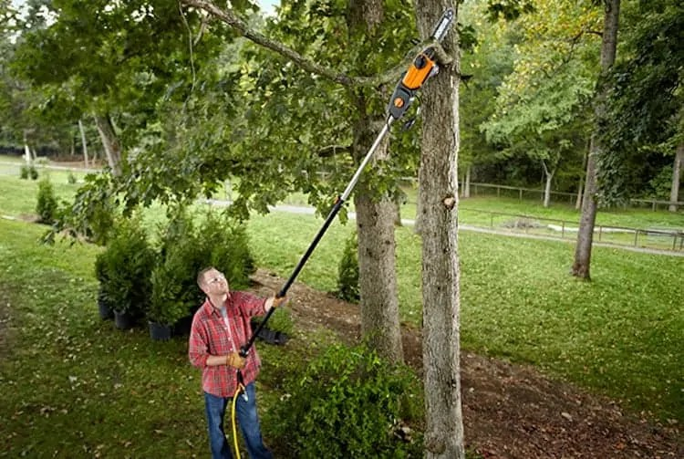 Best Electric Pole Saw For The Money Our Top 5 Picks