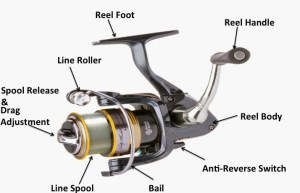 Spinning Fishing Reel | SharpReel