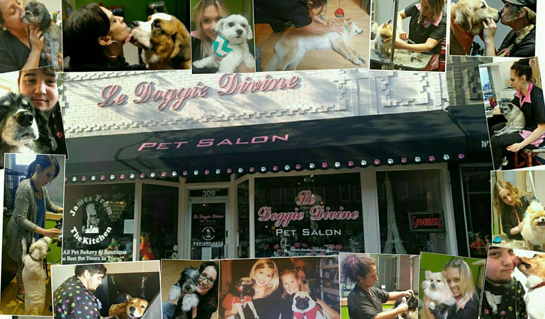 Doggie Divine Pet Salon is one of the top pet groomers in Kane County (Doggie Divine Pet Salon via Facebook)