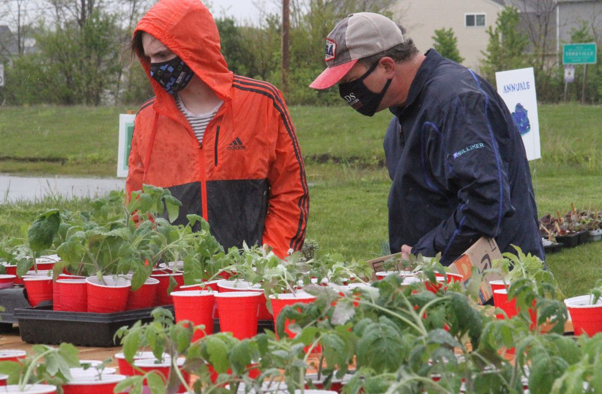 Julian and Jeff Heidrich of Oswego choose their tomato varieties from the racks of vegetables at the sale. More vegetables will be sold at a surplus sale on Wednesday, May 19, 8:30 a.m. to noon.