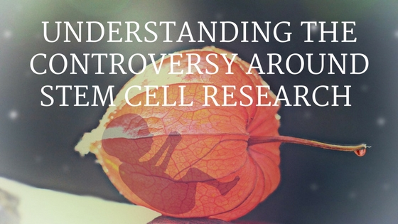 Understanding stem cell controversy