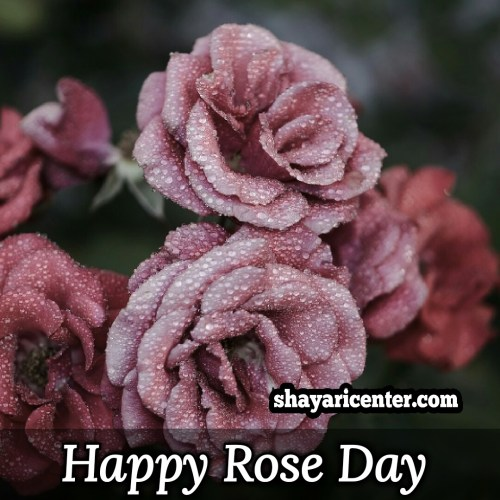 shayari for happy day rose