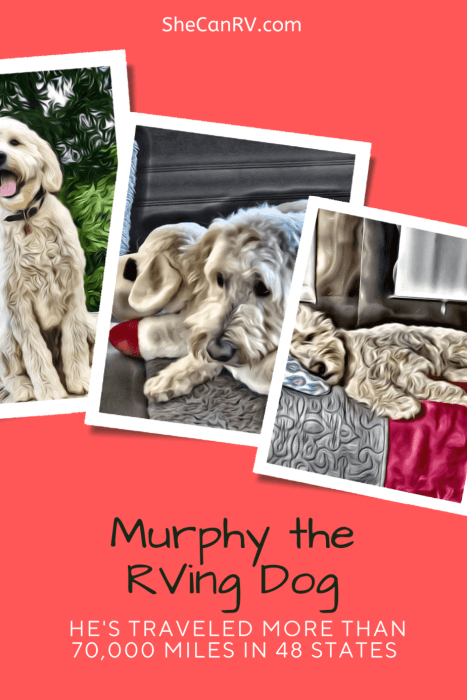 Murphy the RVing Dog