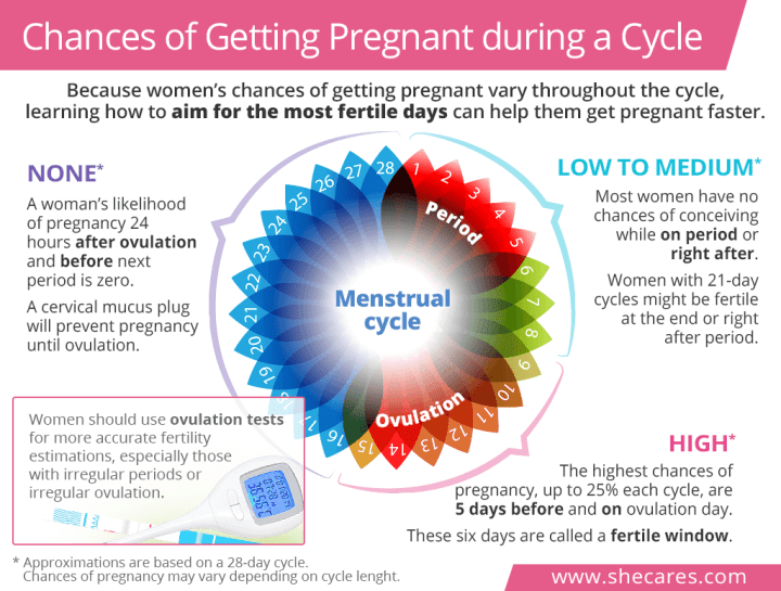 Ovulation Time Frame To Get Pregnant - Viewframes.co