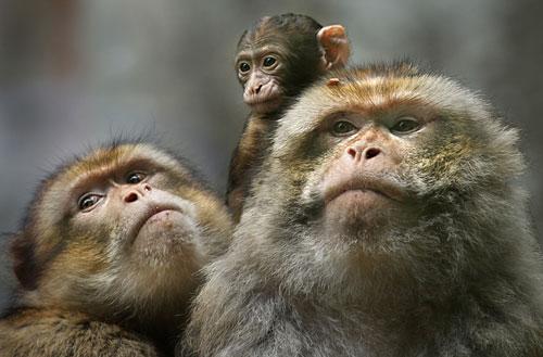 Model Animal Family Photograph