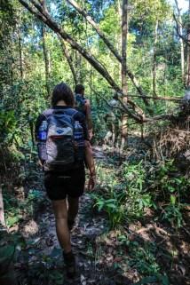 Über Stock und Stein geht's durch den Virachey Nationalpark