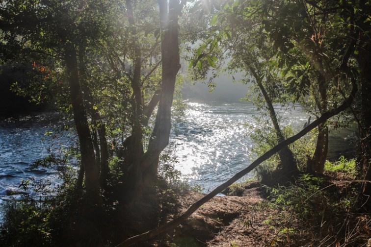 Flussufer im Morgenlicht
