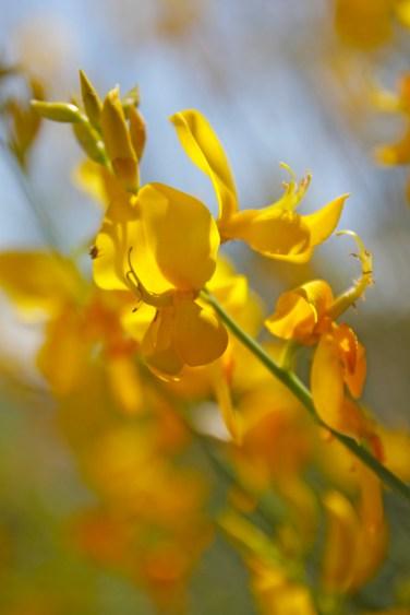 Wilde Orchideen