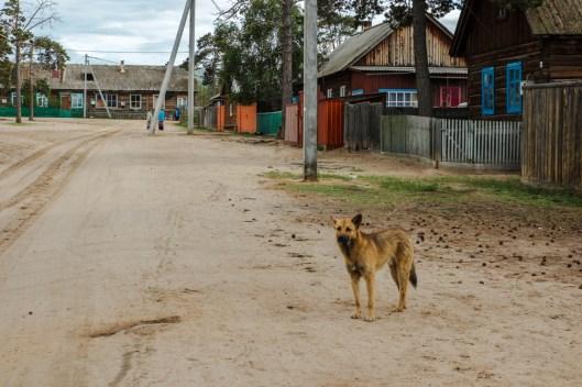 Straßen Khuzhirs - überall tummeln sich Hunde