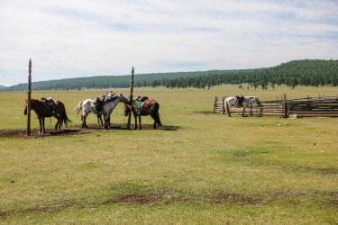 Unsere Ponys warten schon auf uns