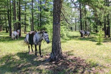 Unsere Ponys warten brav auf uns