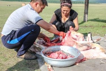 Schafschlachtung am Morgen