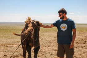 Camel Cuddling