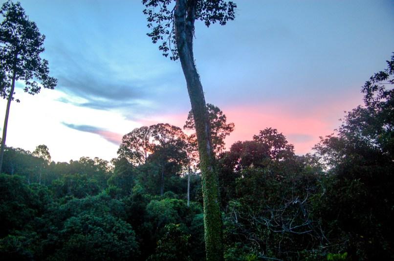 Sonnenuntergang über dem Dschungel