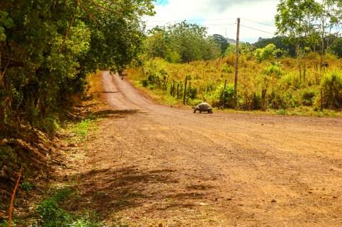 Rancho Primicias