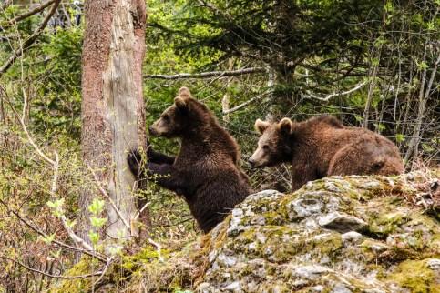 Bärenkinder Ralu und Luserl