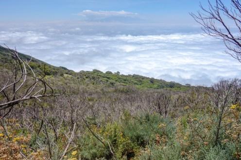 Abstieg in den Nebelwald