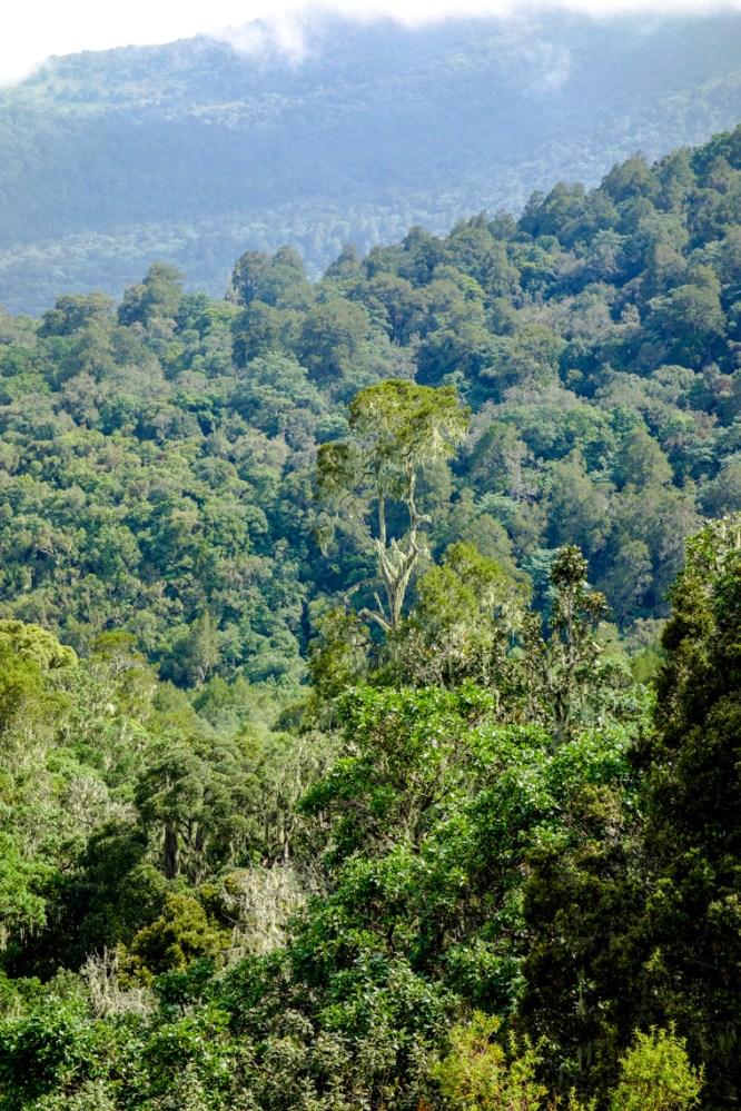 Dschungel um uns herum