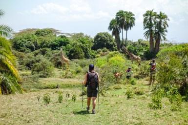 Abstieg zu den Giraffen