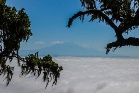 Blick auf den Kilimanjaro über dem Wolkenmeer