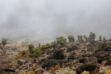 Abstieg in Senetienwälder