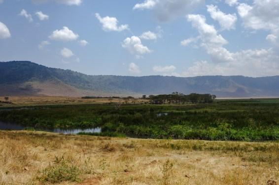 Grüne Sumpflandschaften im Ngorongoro Krater