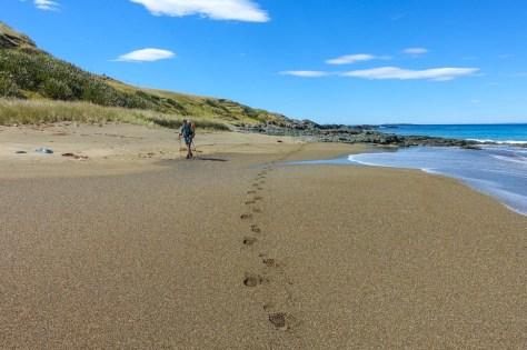 Tihaka Beach Track