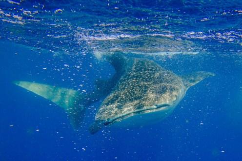 Mein bestes Walhaifoto