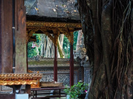 Tempel im Affenwald