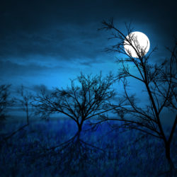 full_moon_____midnight_forest_by_gothrix