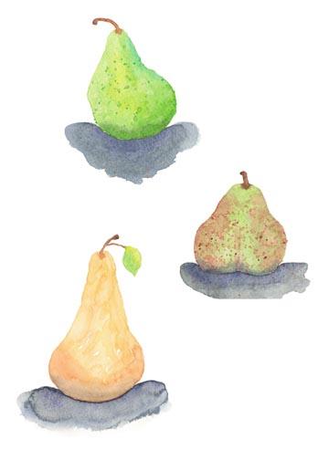 Bartlett, Forelle,  & Bosc Pear. Watercolor on 140 lb. cold press paper.© Sheila Delgado 2013