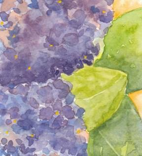 Hydrangea. Postcard 4 x 6, watercolor on cold press paper. © 2014 Sheila Delgado