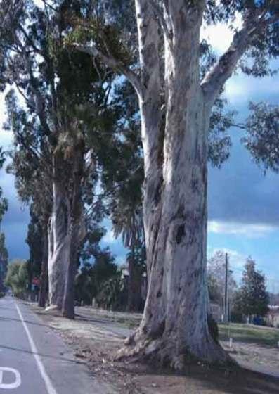Victoria Avenue, Riverside CA